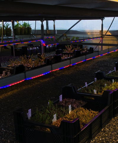 Greenhouse LED lighting