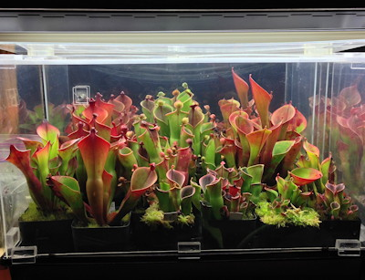 Fluorescent Indoor Plant Lighting Icps