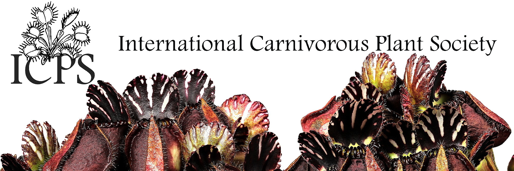 International Carnivorous Plant Society